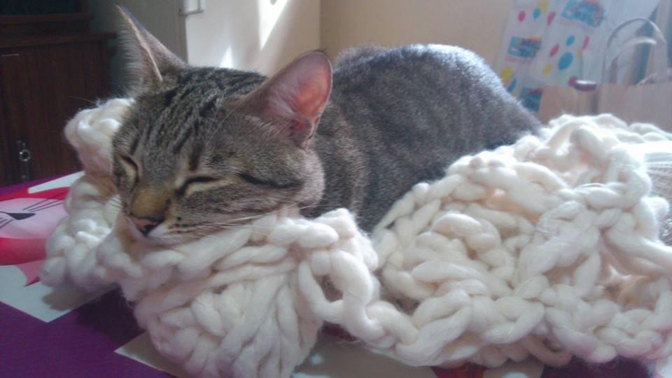 Sciarpa a uncinetto della gatta Tequila Guendalina